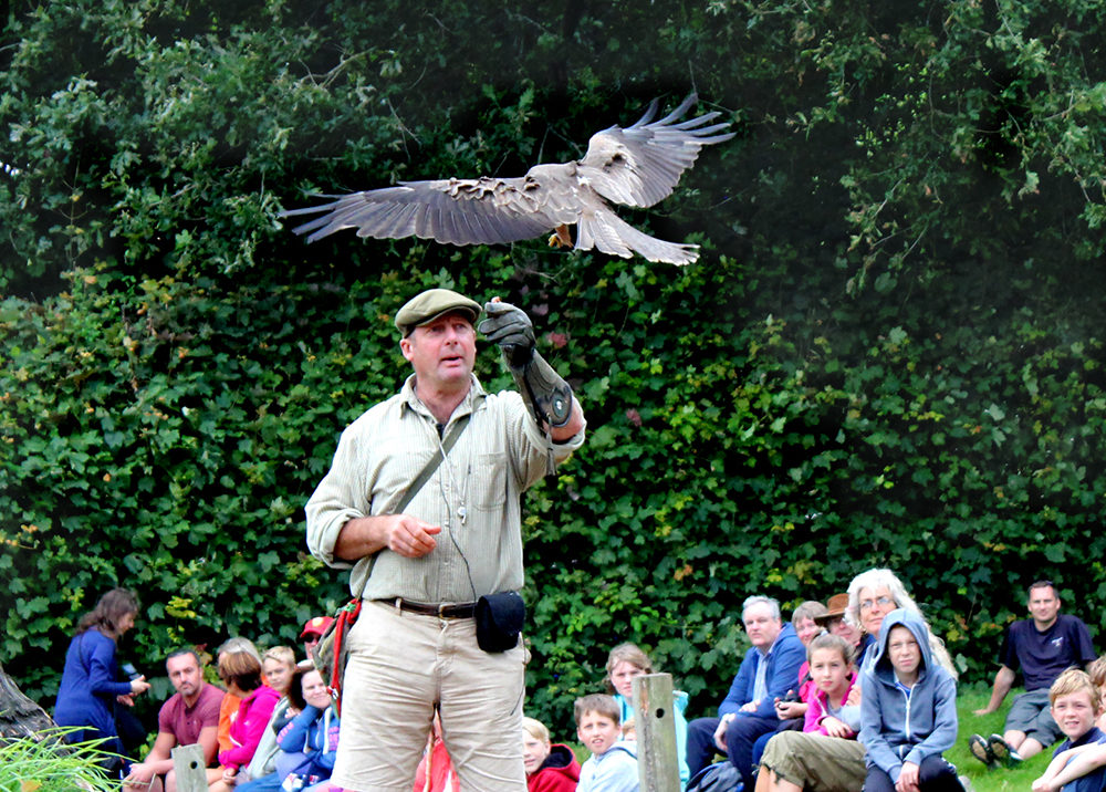 Falconry at Wildwood Escot