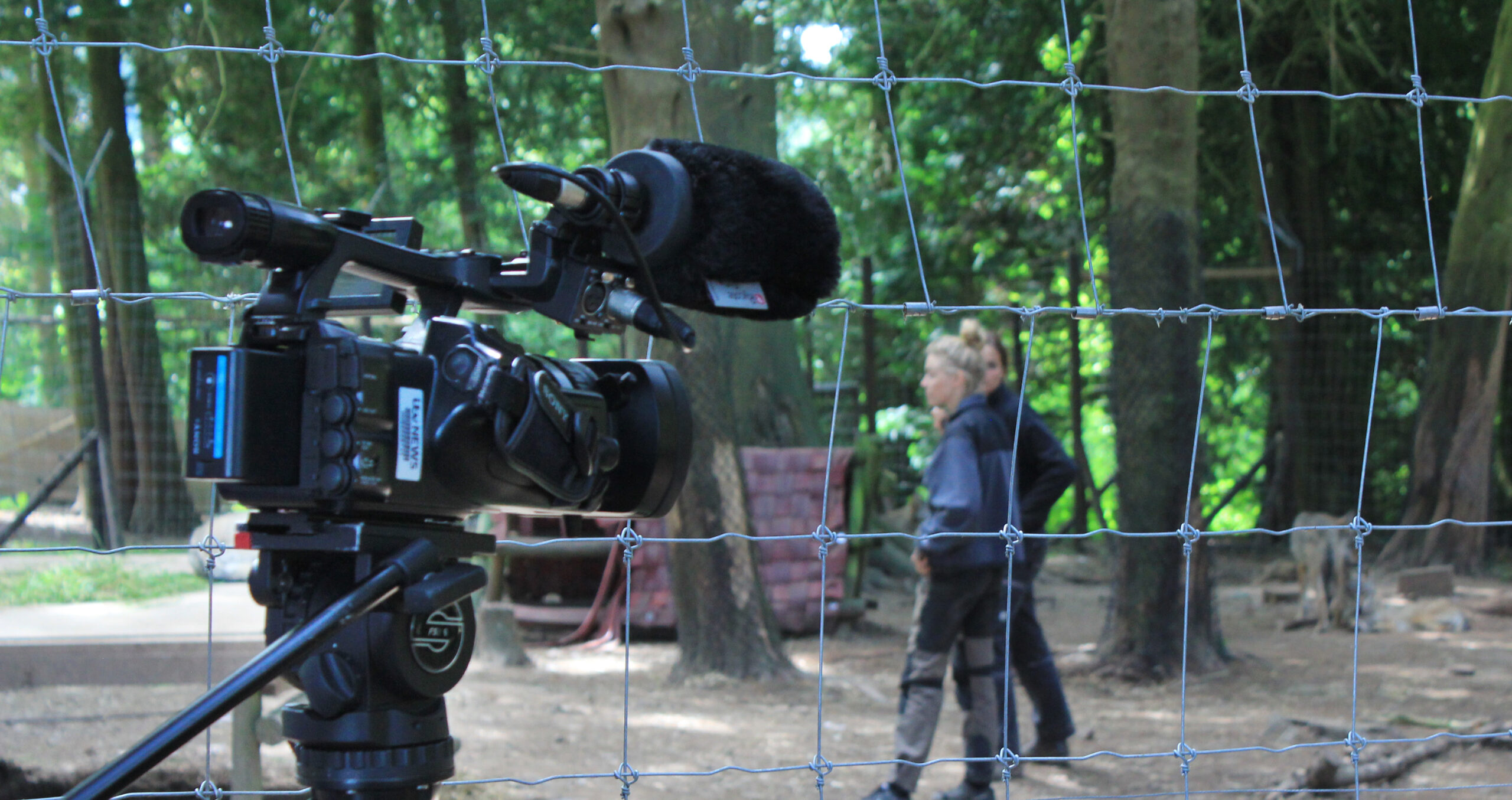 filming_wolves